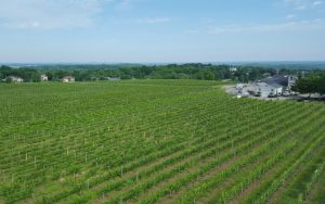 Bird's eye view of vineyard, Casa Larga Vineyards