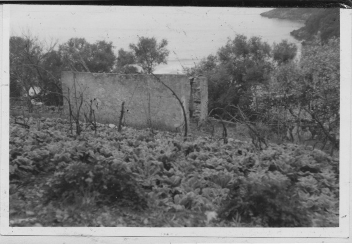 Early Images of the Vineyard