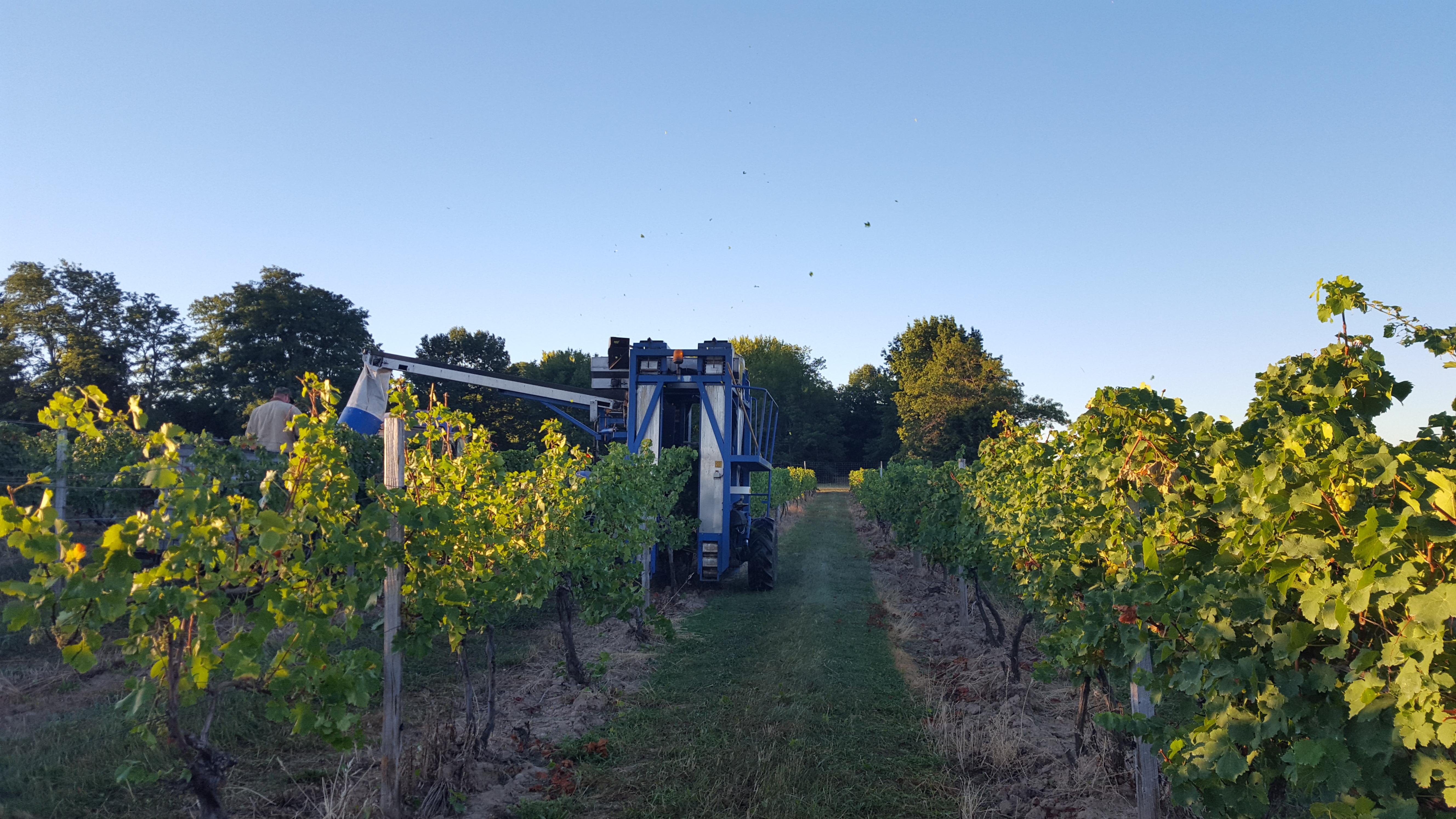 Winemaking team working in the Vineyard at Casa Larga Vineyards