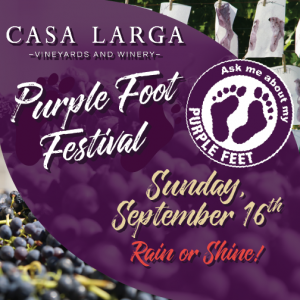 Purple Foot Festival 2018 at Casa Larga Vineyards