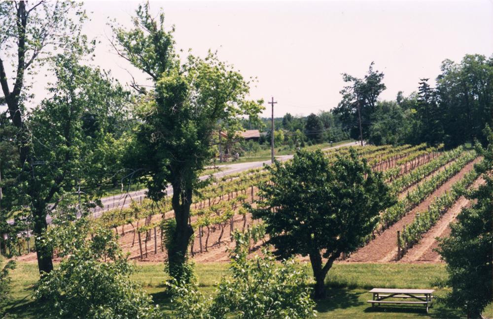 Overlooking the vineyard, Photo Archive, Casa Larga Vineyards