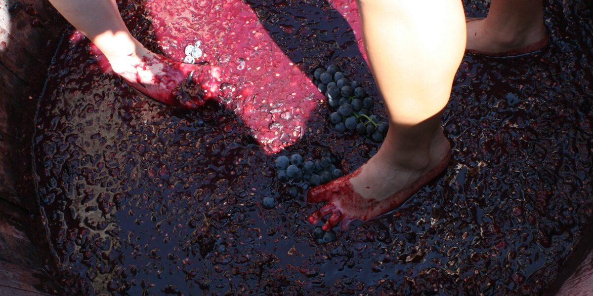Stomping grapes, Purple Foot Festival, Casa Larga Vineyards